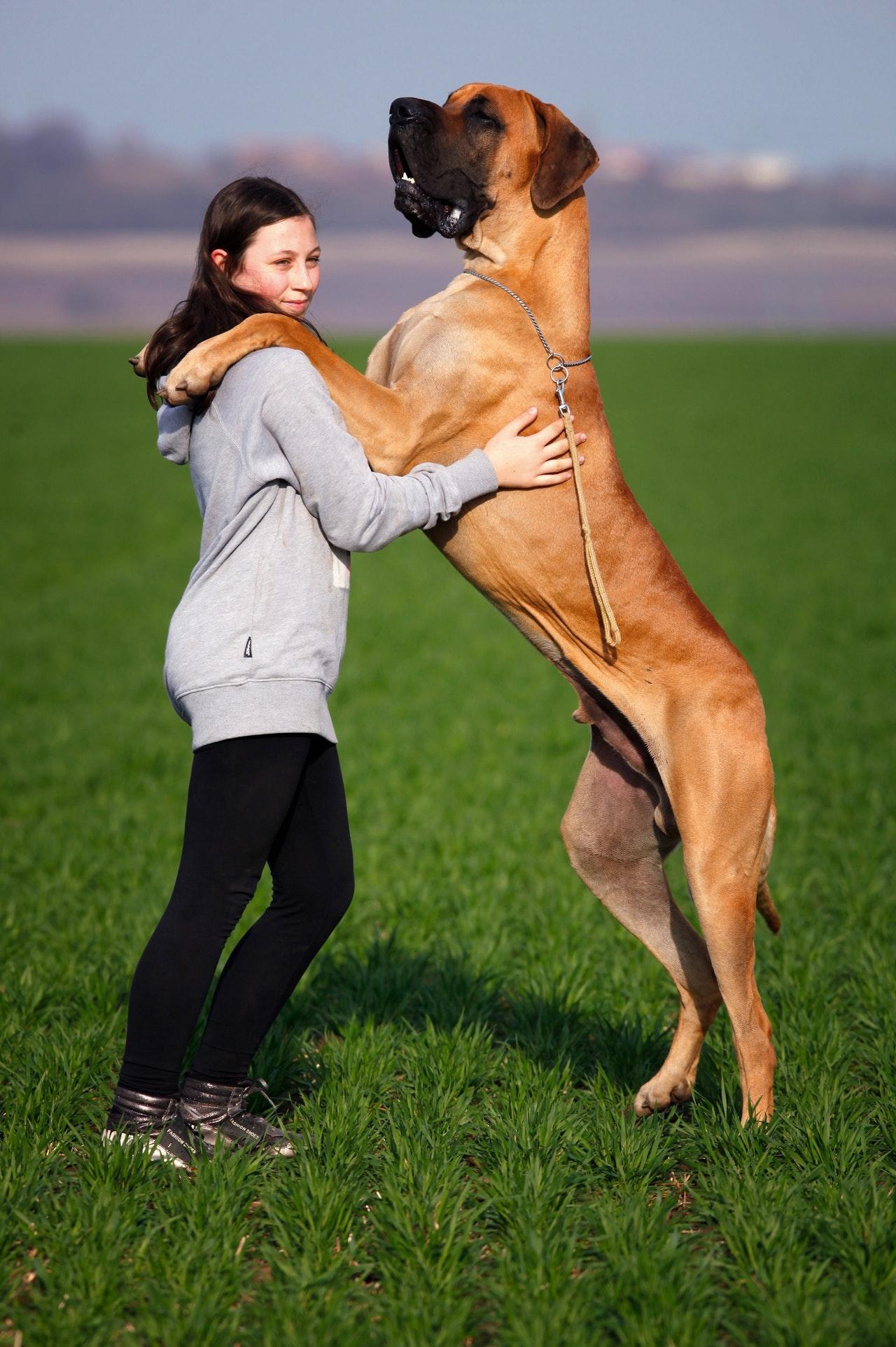Din hund kan give dig mentalt velvære