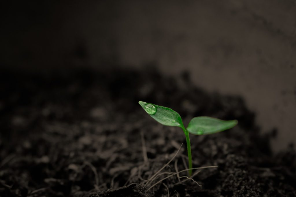 plante der vokser op